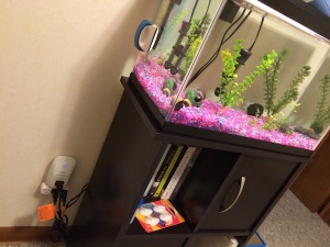 wemo-review-fish-tank